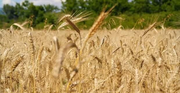Сельское хозяйство можно возродить радикальными мерами