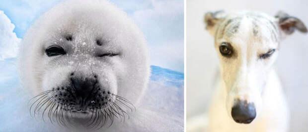 38.  животные, собака, сходство, тюлень