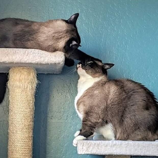 Одинокий котик боялся всех вокруг и считался диким, но лишь до появления в его жизни старшего «братца»