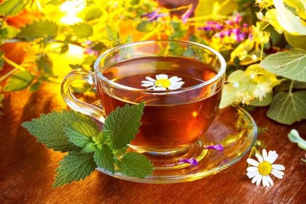 Травяные настои и отвары – подготовка лекарственных чаев