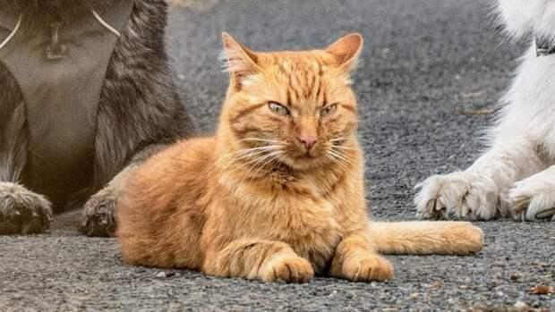 Кот с суровым «лицом» живет с собаками и считает себя одной из них