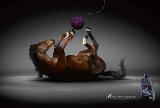 Лошадка как кошка