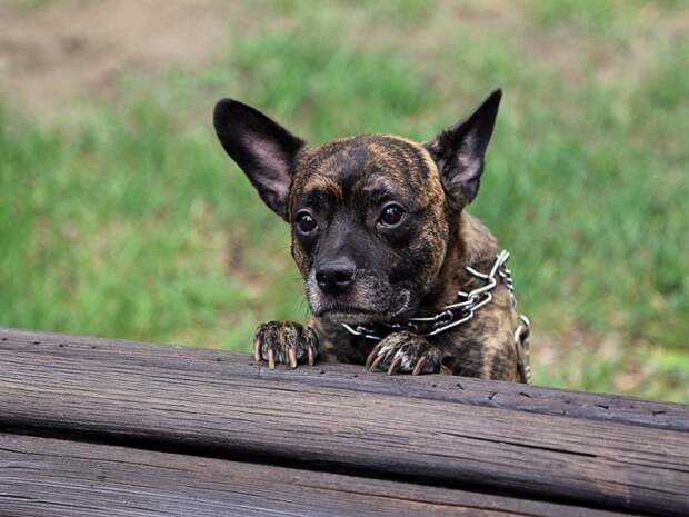 Владельцев собак в России начнут штрафовать