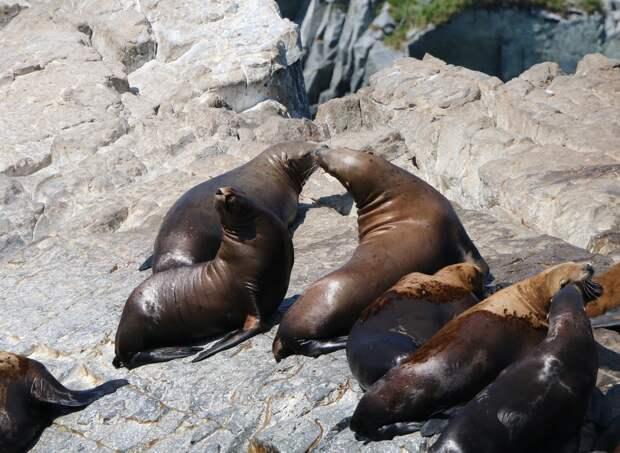 Камчатка. Часть 1-я. Вдоль камчатского берега - великолепие пейзажей и удивительный животный мир прибрежных вод.