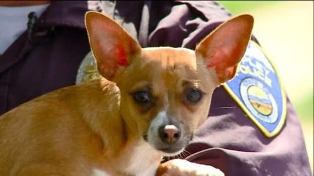 «Денег нет на эвтаназию!»: жестокосердная девушка попыталась убить собаку, но животное вовремя спасли