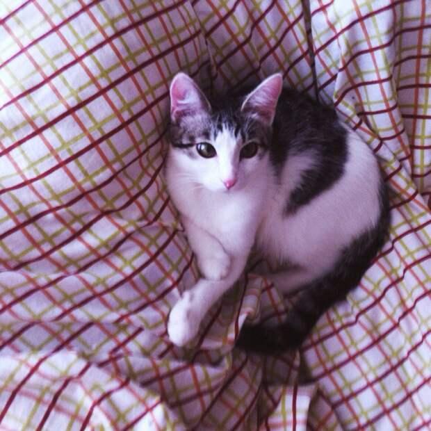 Однажды судьба свела нас с нашей замечательной кошкой...