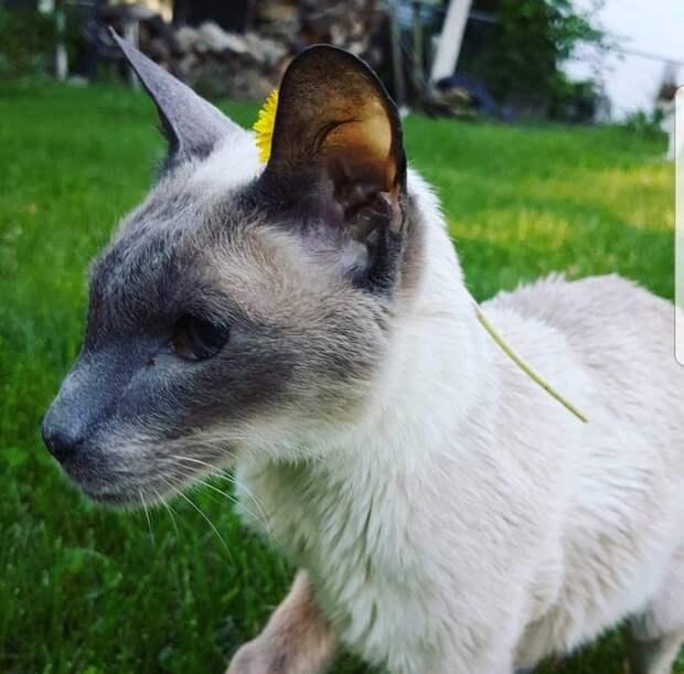 кот гуляет