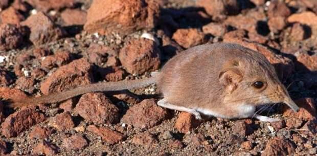 В 2014 году учеными был открыт 221 новый вид живых существ