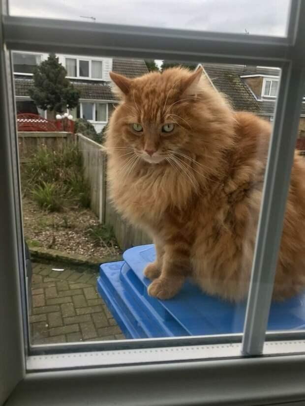 19 суперпушистых кошек, которых так их и хочется потискать