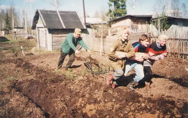 Работы в мае - сад, огород, цветник