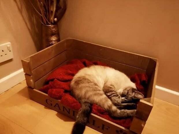 Британский кот пришел домой спосланием, которое заставило его хозяина переживать
