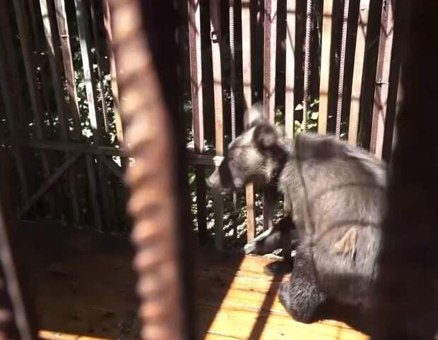 В Ростовской области спасли медвежонка, запертого в доме без еды и воды