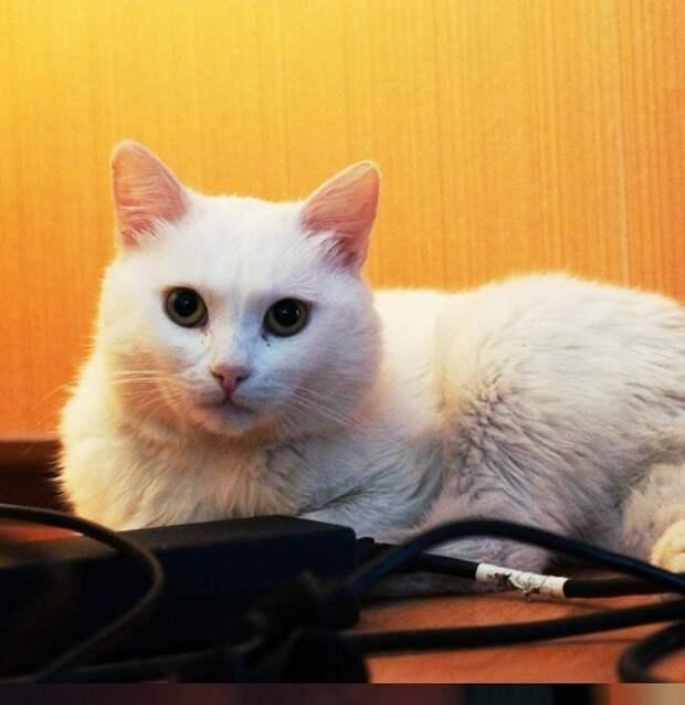 В Казани спасли кота, который жил с пулей в животе. Кот ищет хозяина!