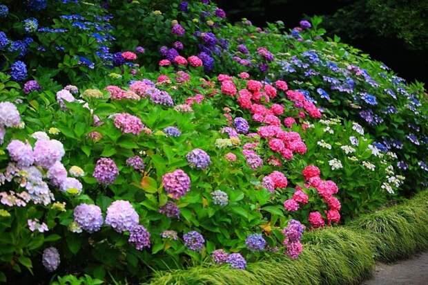 Декоративные кустарники для средней полосы России - Огород, сад, балкон