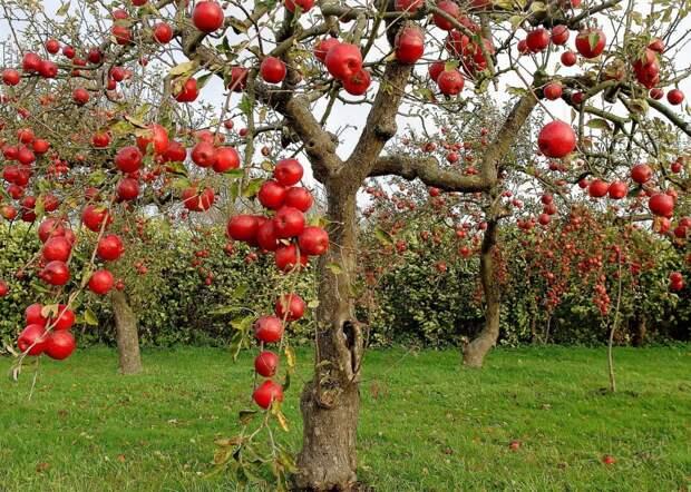 10 способов упростить работу в саду