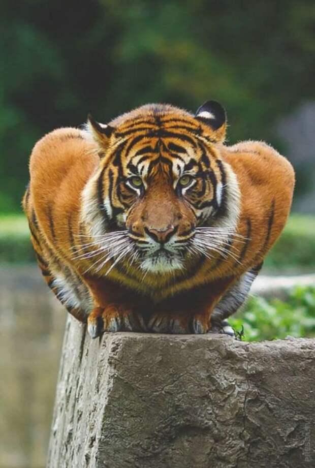 Животные с завидной мускулатурой