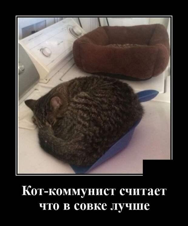 Демотиватор про кота на совке