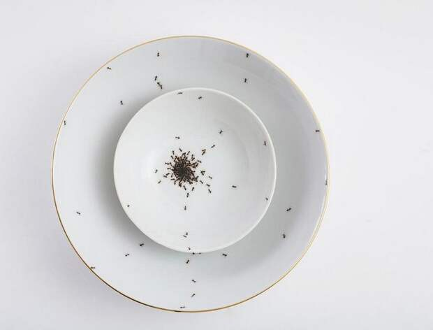 Эксклюзивная посуда: почему чашки с муравьями стоят так дорого
