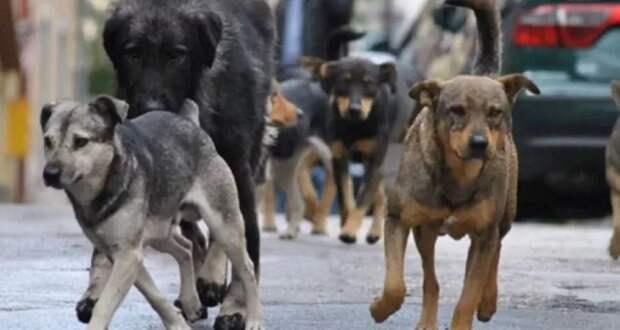 В Саратове рядом со школой на женщину набросилась свора бродячих псов