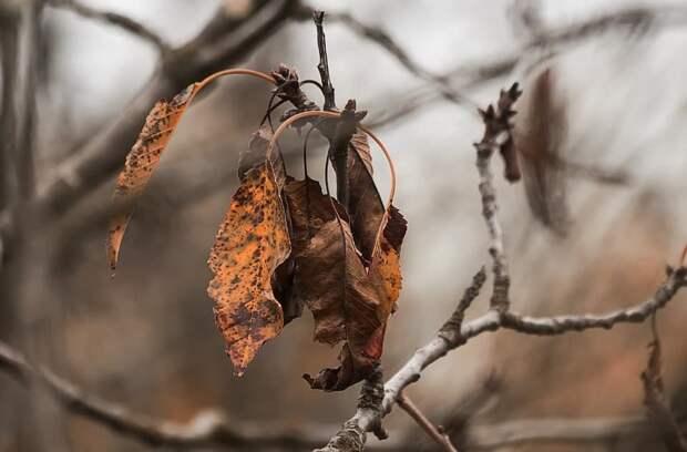 Сухое дерево на 7-й Кожуховской спилят до конца октября
