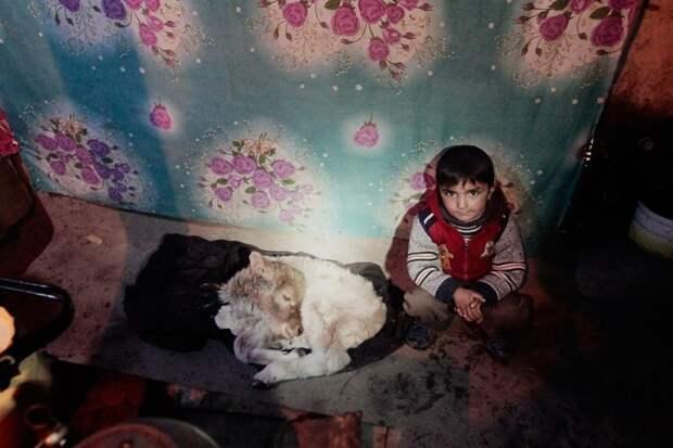 В холод новорожденных ягнят и козлят берут в жилье, чтобы не замерзли жизнь простых людей, миграция, таджикистан