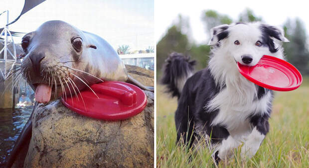 34.  животные, собака, сходство, тюлень