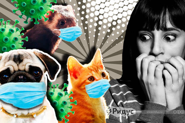 Стоит ли бояться волны заражений коронавирусом от домашних питомцев