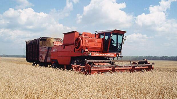 На Кубани начали уборку пшеницы