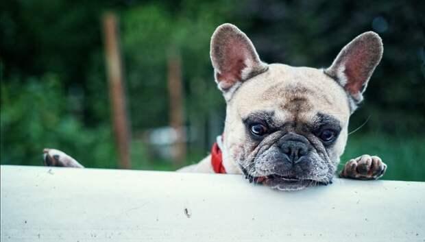 УК Подольска попросила владельцев собак убирать их фекалии во время прогулки