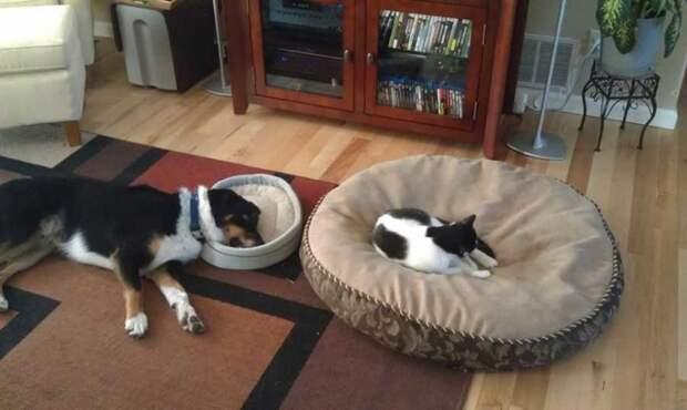 Иногда у них просто отбирают лежанку… кот, котики, прикол, юмор