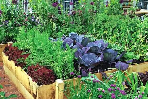 Признаки недостатка и избытка питательных веществ у растений