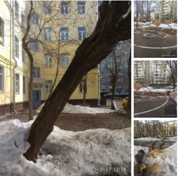 Спиленное дерево повредило спортивную площадку на Енисейской