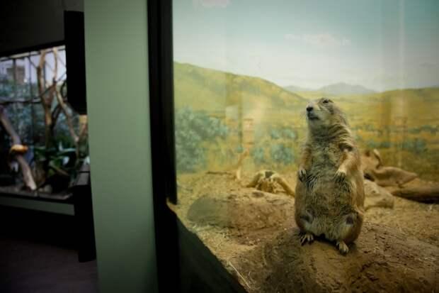 Настоящая жизнь зверей в зоопарках