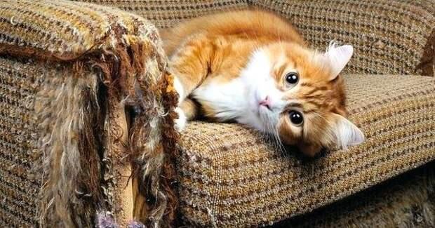 Мастерица придумала, как обновить испорченный котом диван. Получился настоящий шедевр!