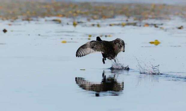 кабанский заказник птицы