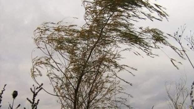 Синоптики предупреждают об усилении ветра в Красноярске до 20 м/с