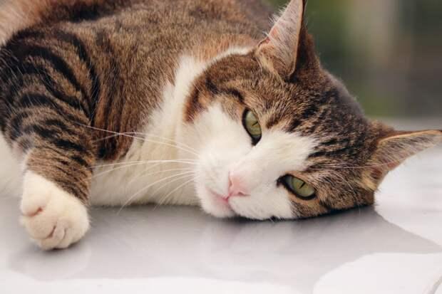 Управа района Северный позаботится о кошках и собаках из заказника