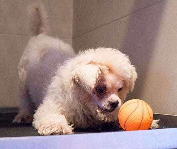 пес играет с мячом