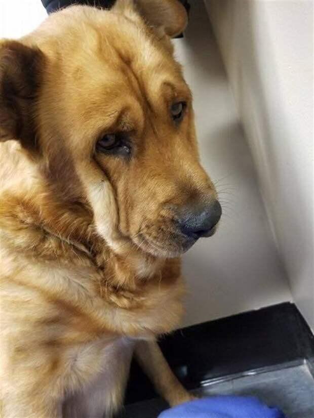 Печальная собака не хотела смотреть на людей после гибели своего хозяина, затем она услышала голос, который все изменил