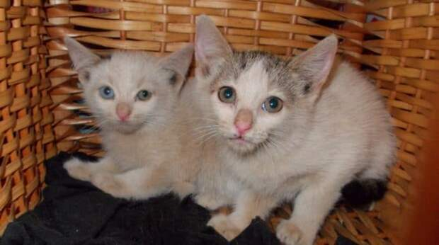 Два котёнка неизвестно как очутились на стройке. Добрый мужчина решил спасти их, но сначала их надо было поймать