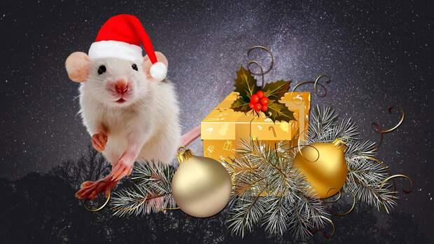 Как и в чем встречать Новый 2020 год белой Крысы - советы астролога