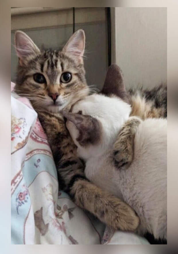 Накричала на кошку, а та пошла жаловаться своему брату