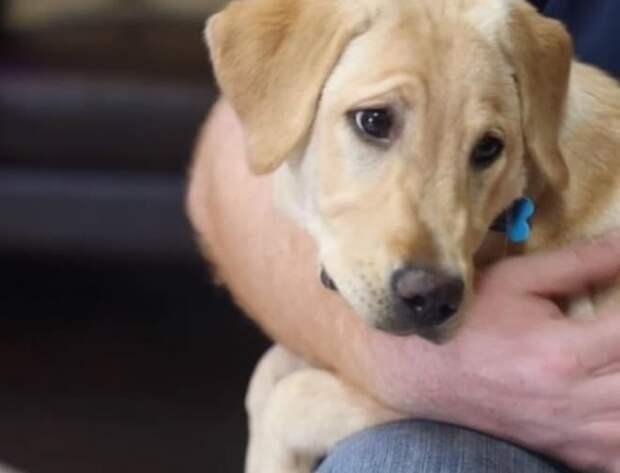 Пес на руках