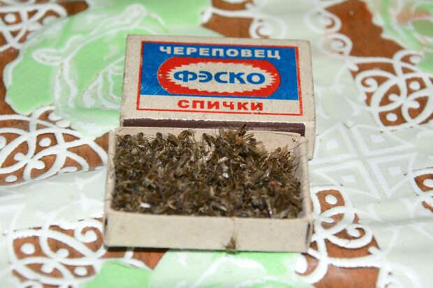 Сушеные комары