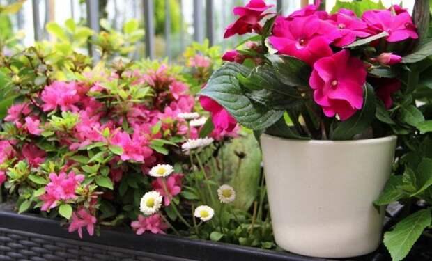 Секреты роскошного цветника в квартире