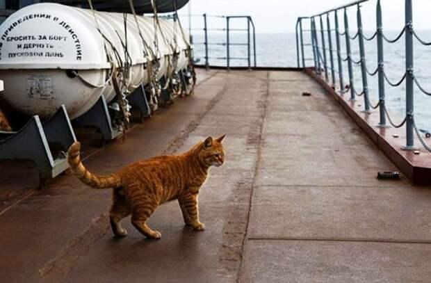 Животные на кораблях
