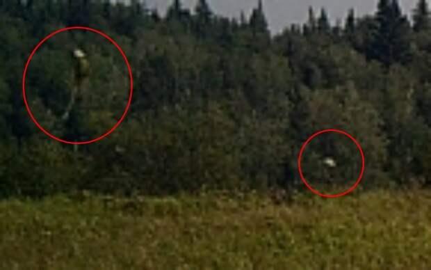 Неопознанные существа попали на охотничью камеру в Саскачеване