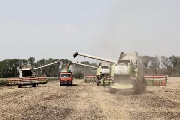 В Краснодарском крае собрали рекордный урожай зерна