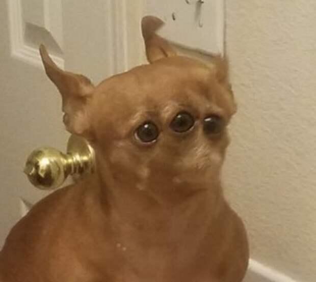 Спецслужбы рассекретили фотоулики маскировки пришельцев под собак!