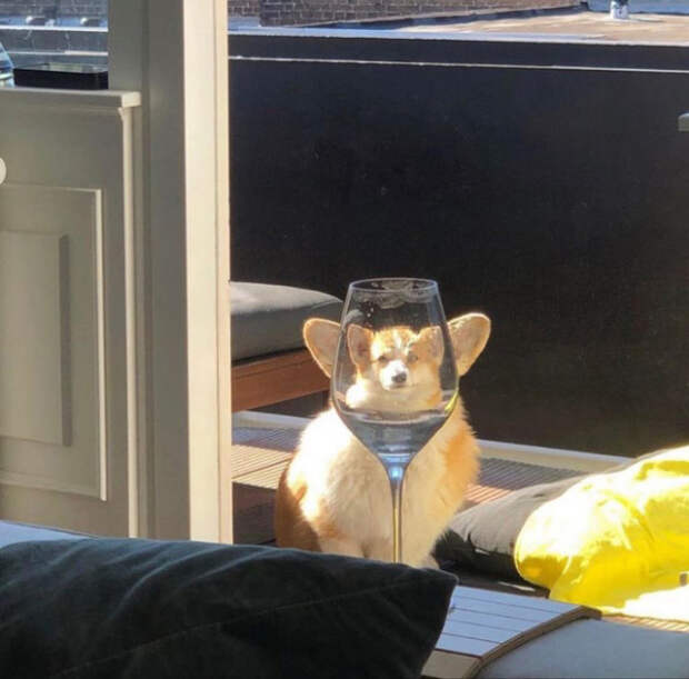 Животные и стекло